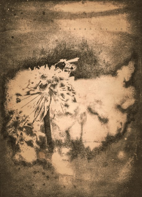 plume sur cyanotype, virage au thé, 2018