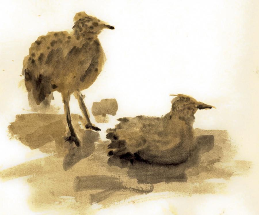 Oiseaux bruns
