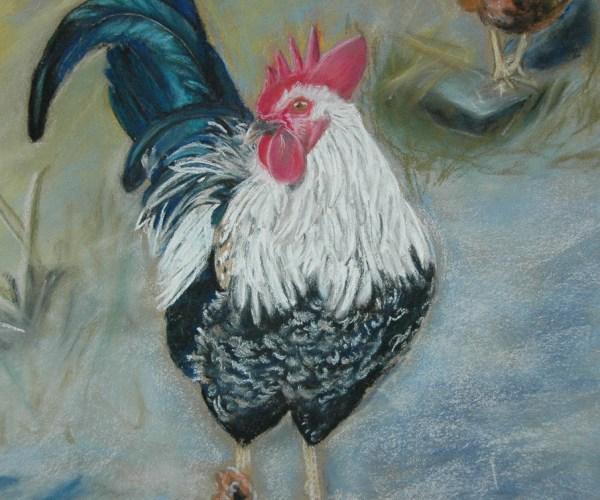Le coq de Mémy