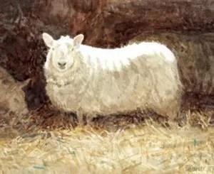 'Ewe' 2007 watercolour. Sold