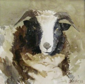 'Jacob rare breed' 2007 watercolour. Sold