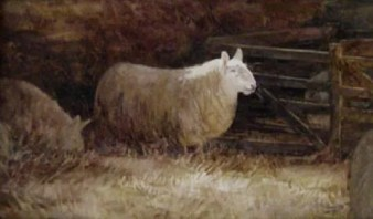 'Penned Sheep' 2007 watercolour. sold