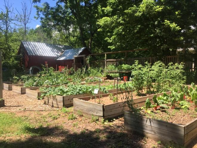 Button Farm raised beds