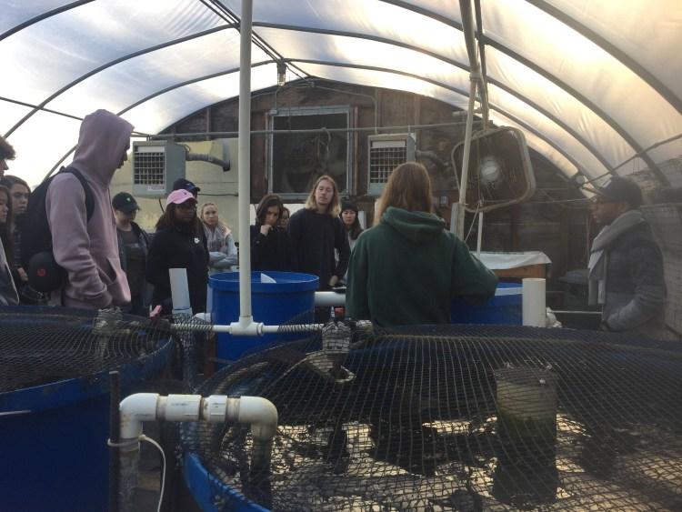 urban aquaculture