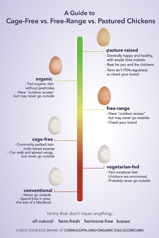 Egg choices