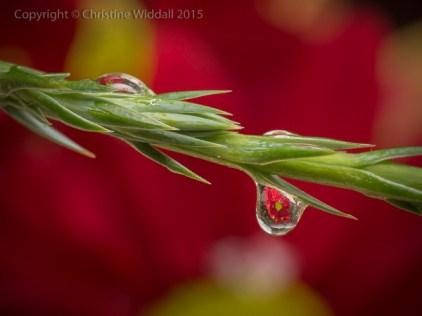 dewdrop13