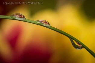 Water Drop Refractions 7