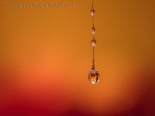 Water Drop Refractions 5
