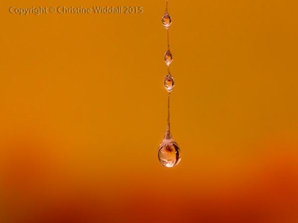 Water Drop Refractions 10
