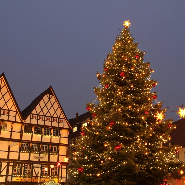 The Traditional Outdoor Christmas Tree 1
