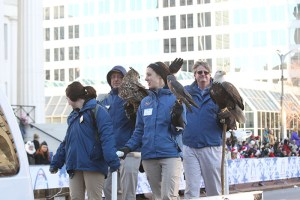 World Bird Sanctuary at the 2013 Ameren Missouri Thanksgiving Day Parade.