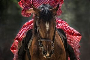 horse-pixaby-lind-mt