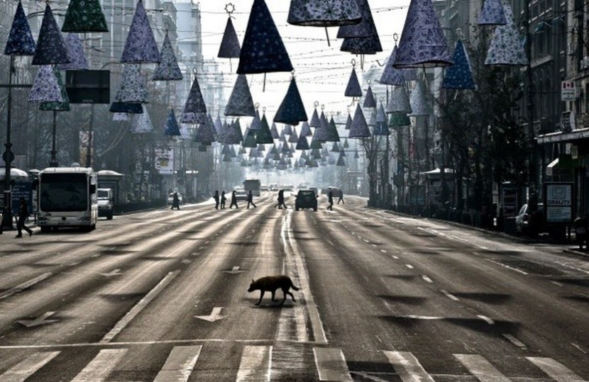 Christmas In Romania – A stray dog takes advantage of the low traffic to cross an almost deserted boulevard during a spell of sunshine in Bucharest, Romania