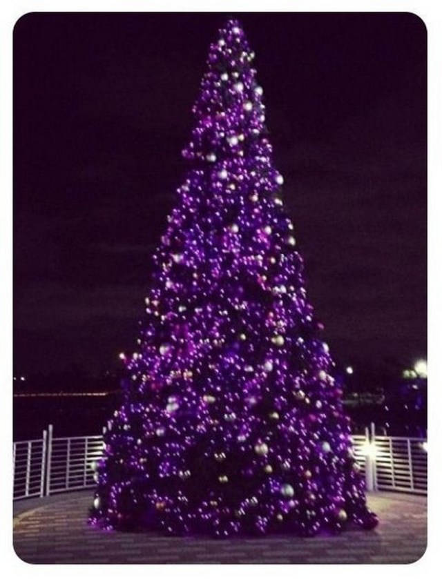 Purple Christmas Trees Christmas Photos