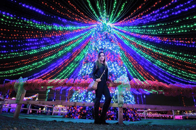 Calm Zoo Christmas Lighting
