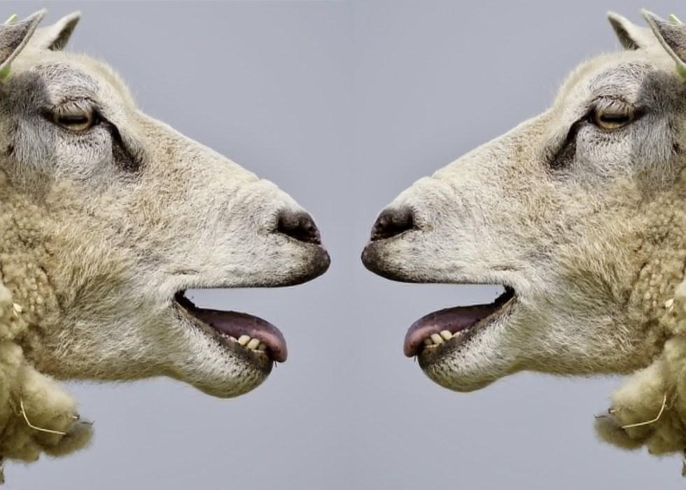 Comment Mieux Communiquer – L'art Du Reproche Sans Dispute