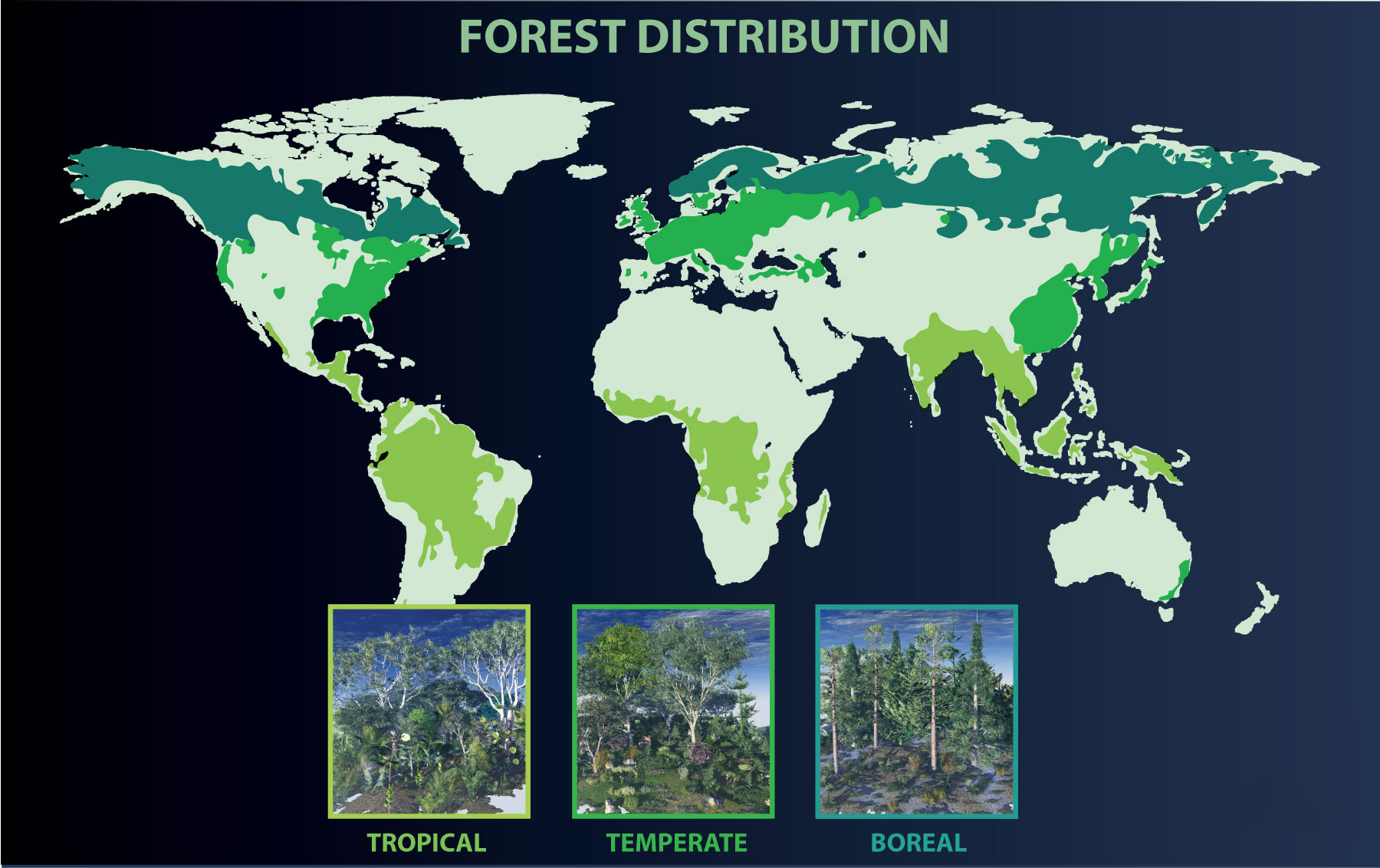 Tropical seasonal forest, which refers to both deciduous and. Coniferous Forest World Map Shefalitayal