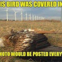 Killing gracious birds