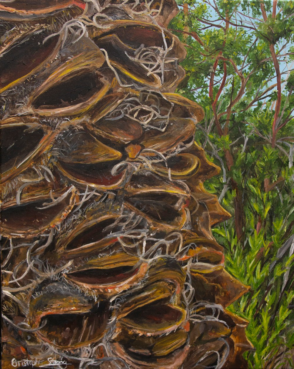 Banksia in the forest - Oil on canvas - 40cm x 50cm