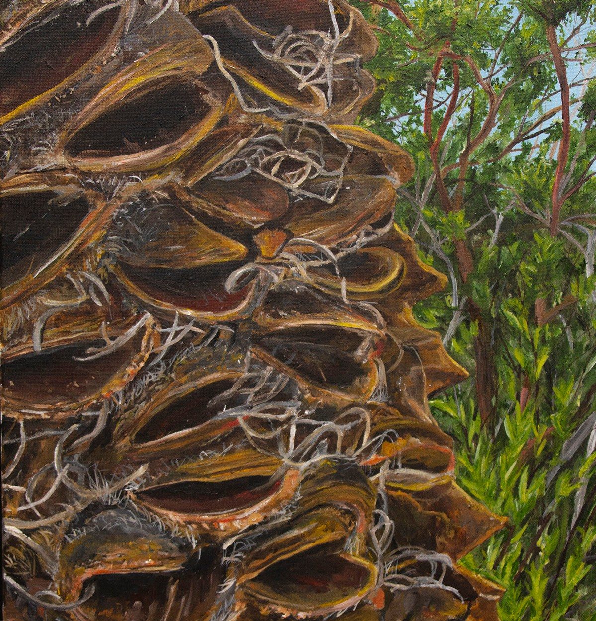 Banksia in the forest