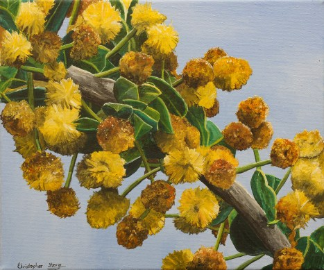 Yellow and Ochre Wattle
