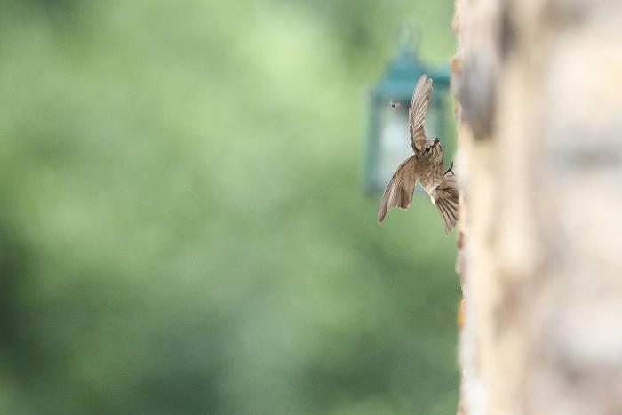 oiseaux des bois christophe salin photographe nature et environnement