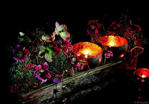 Bell-Arte in Blooms 2014