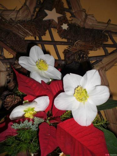 für Florales 2010 (2)
