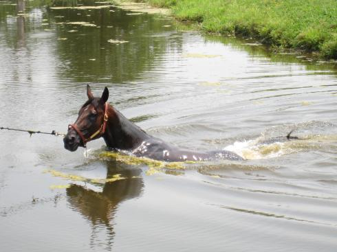 Dewey loves the pond