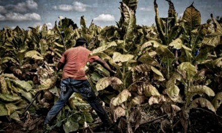Tobacco Companies Commit to Protect Child Workers Worldwide | Human Rights Watch