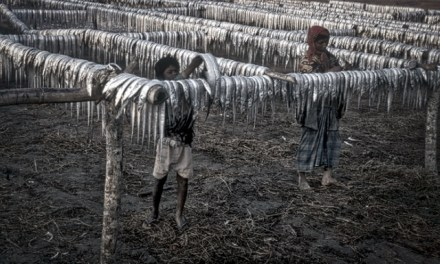 THE TELEGRAPH -Satellites reveal 'child slave camps' in Unesco-protected park in Bangladesh