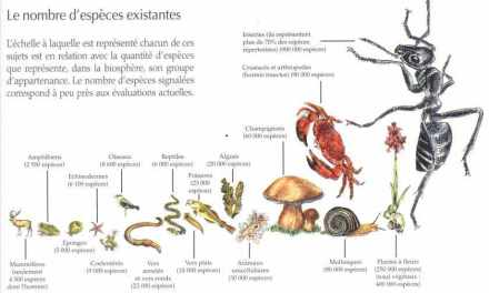LE MONDE –  Le déclin massif de la biodiversité menace l'humanité