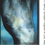 BOOK – BERKELEY UNIVERSITY – Commodifying Bodies / Nancy L. Ascher, President of The Transplantation Society (TTS), USA