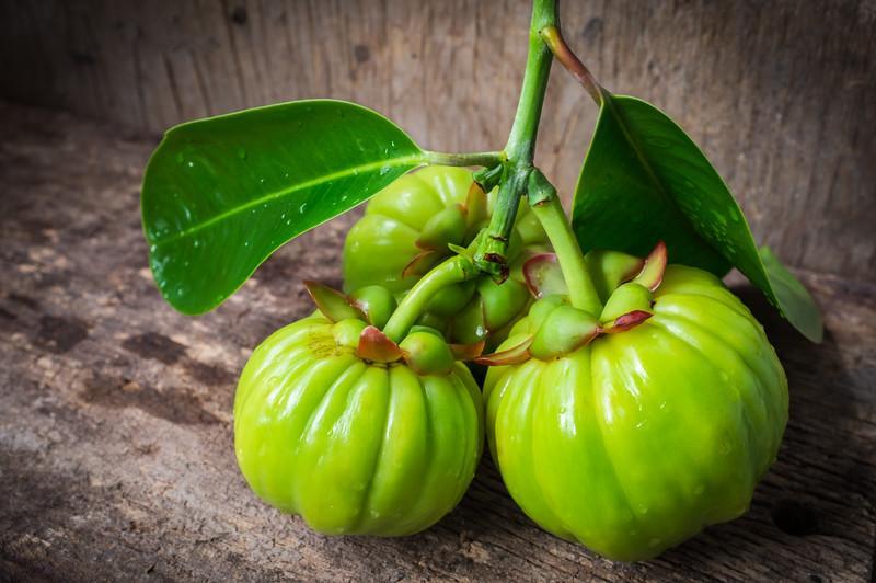 garcinia frutta garcinia cambogia