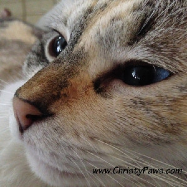 Profile - Christy Paws