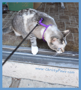 harness training - Christy Paws