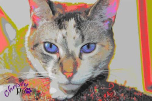 Caturday Art: Fiesta Time - Bright colors