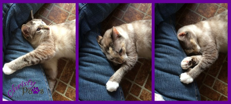 Sunday Selfies: Mom is Home - I rolled around like she was covered in catnip.