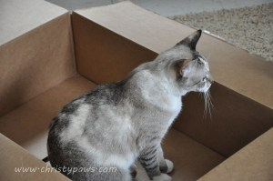 First I had to inspect the box