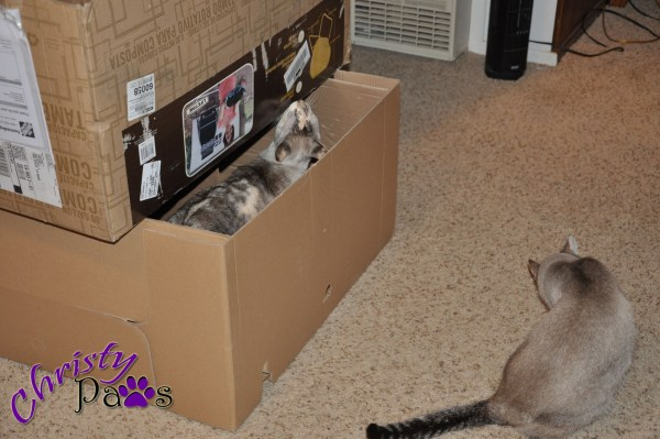 Finally, that thing was in the yard where it belonged and this beautiful, huge box was mine!