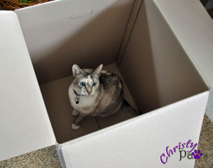 Exercise in Frustration - Christy in a box