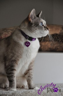 I Have a New Identity - ID tags for cats