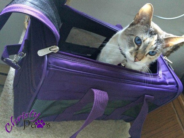 My new carrier for my trip to BlogPaws! It looks a little blue in this light but it is very purple.