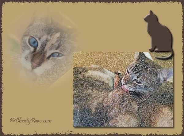 Caturday Art: Affection from Ocean?