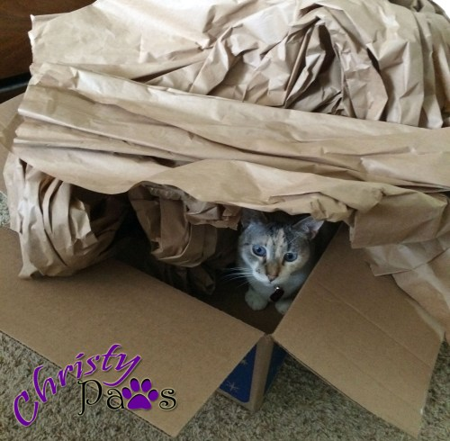 Christy in one of her paper forts - boxes