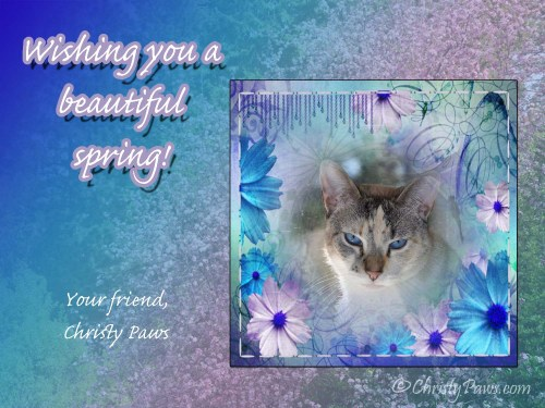 Wordless Wednesday: Spring