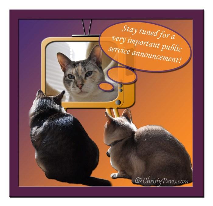 Caturday Art: PSA - National Animal Disaster Preparedness Month
