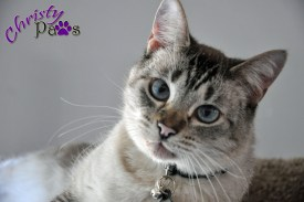 Should I be doing this? - Do blogging kitties get away with more? www.christypaws.com