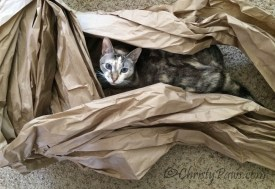 Hiding in my paper fort. Making of Flat Me, flat pet for BlogPaws