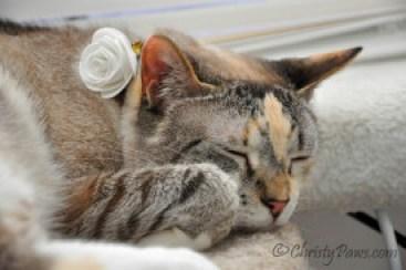 Sleeping Lola 155_1640